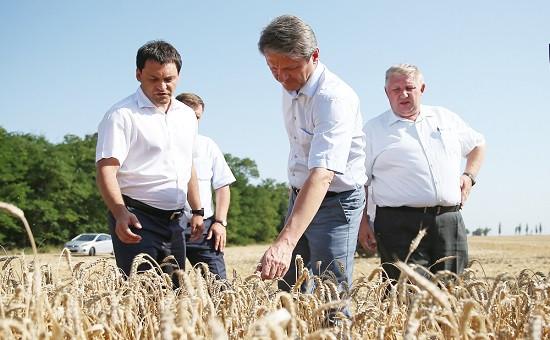Фото: agrobook.ru
