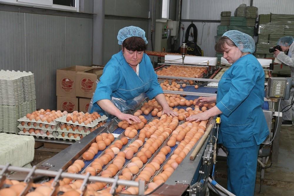 Фото:Министерство сельского хозяйства Калининградской области