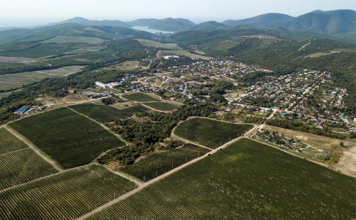 Виноградники в поселке Абрау-Дюрсо в Краснодарском крае