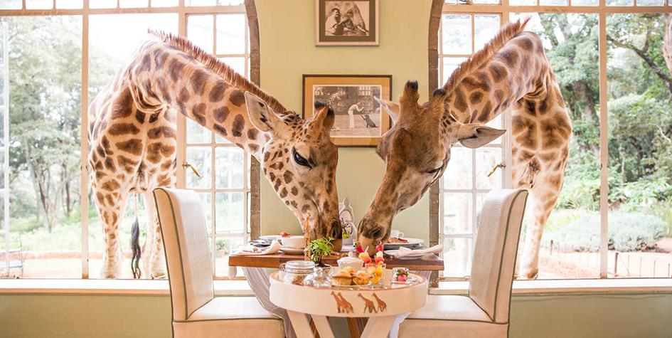 Фото: thesafaricollection.com
