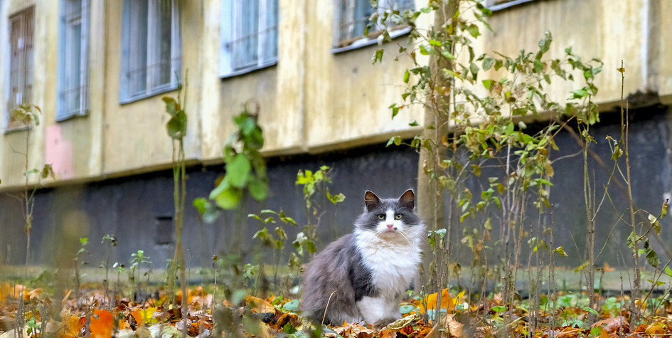 Фото: Белкина Анна/ТАСС