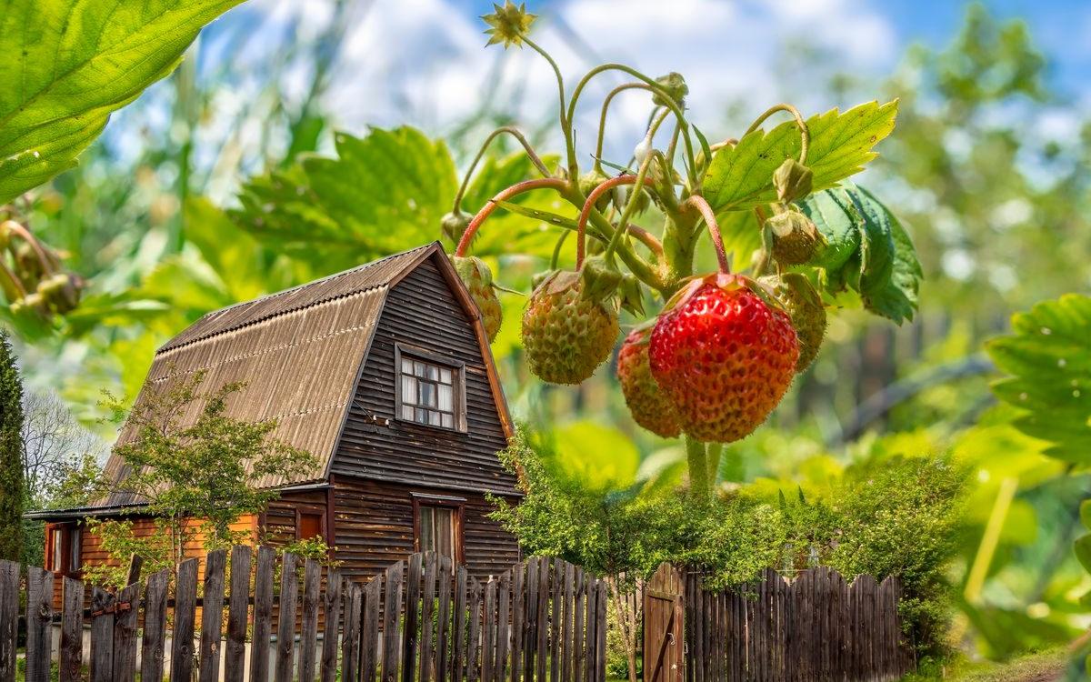 Фото: Andrey_Nikitin\shutterstock