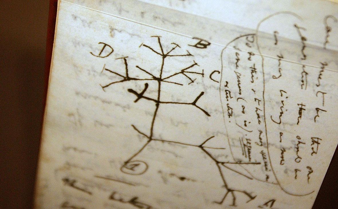 Эскиз «Древа жизни» в записной книжке Чарльза Дарвина