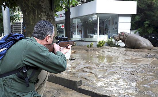 Отлов сбежавших из тбилисского зоопарка животных с помощью усыпляющих зарядов