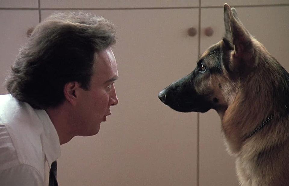Кадр из фильма «К-9: Собачья работа»