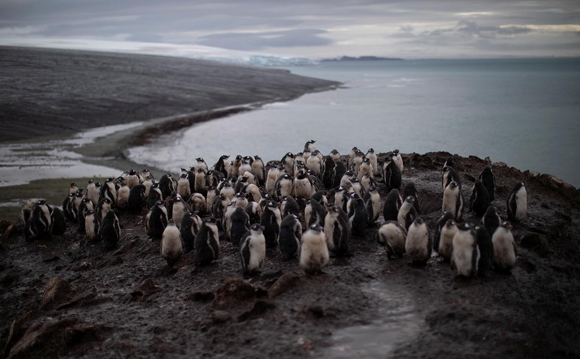 Фото: Ueslei Marcelino / Reuters