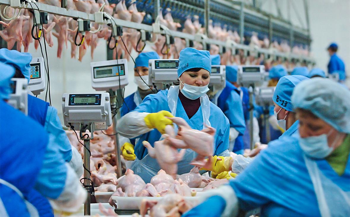 Процесс переработки мяса птицы на «Приосколье»