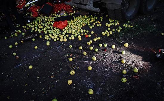 Уничтожение санкционных фруктовв Подмосковье 6 августа 2015 года