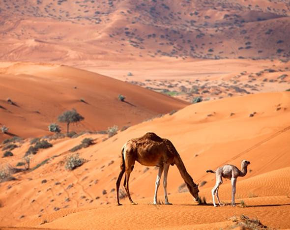 Фото: пресс-материалы Waldorf Astoria Ras al Khaimah; depositphoto.com
