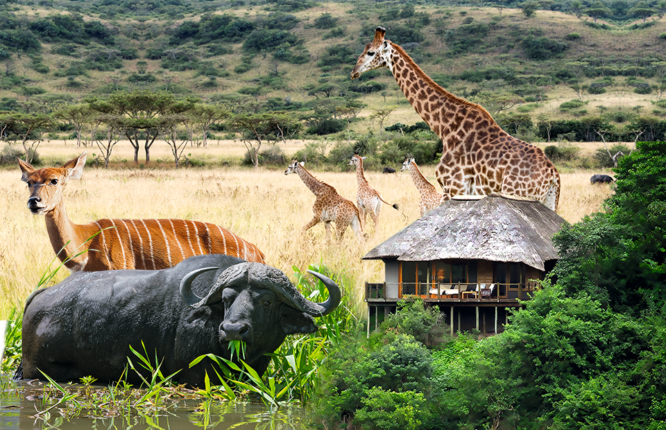 Фото: пресс-служба Karkloof Safari spa