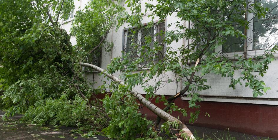 Последствия урагана наулице Коненкова вМоскве