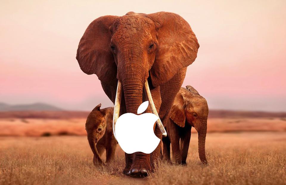 Кадр из фильма «Королева слонов»
