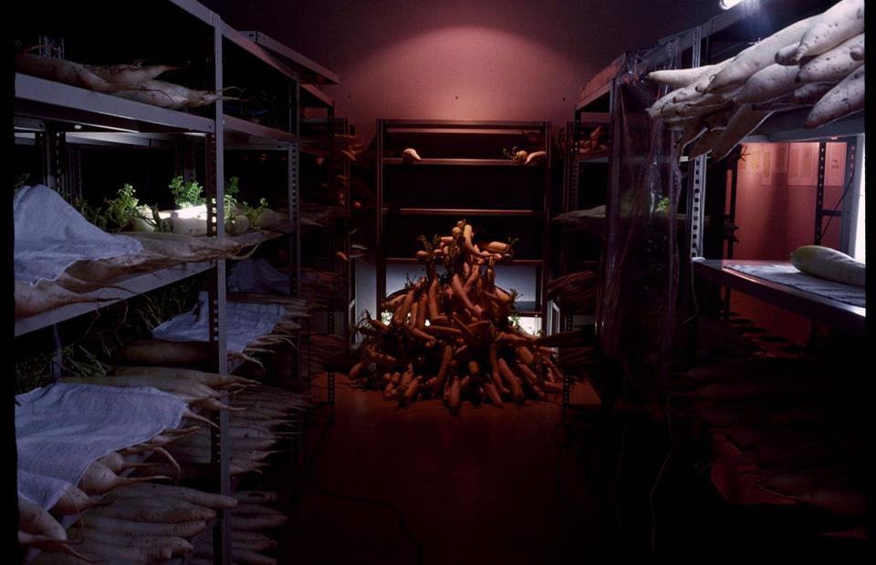 Косен Оцубо, «Смерть редиса», 1994