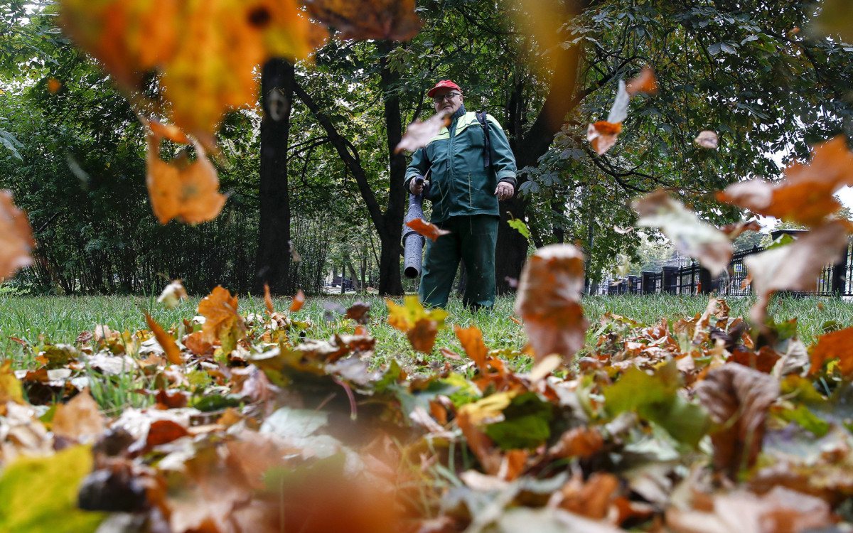 Уборка опавших листьев в парке «Останкино»