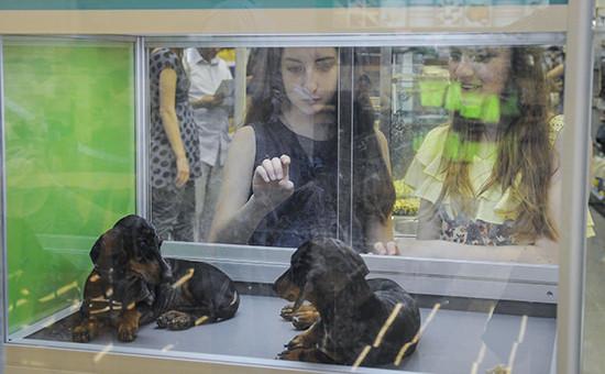 Девушки у витрины зоомагазина