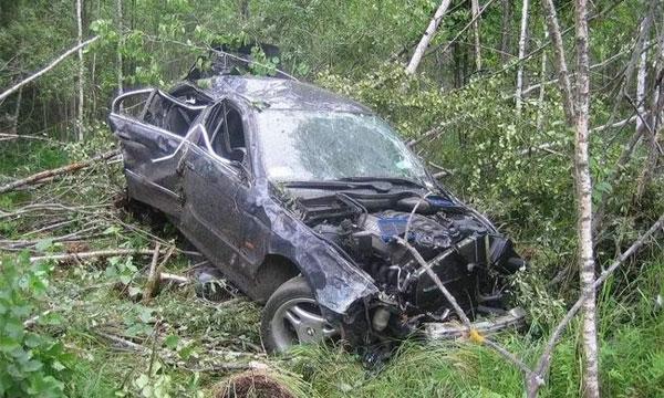 В Подмосковье запретят въезжать в лес на машине