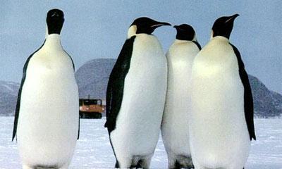 В Техасе попал в ДТП грузовик с пингвинами, 4 птицы погибли