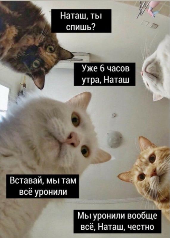 Мем с котами «Наташ, ты спишь?»