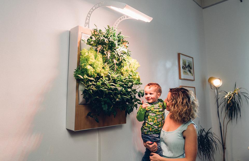Техно-будущее: как вырастить овощи и ягоды в квартире