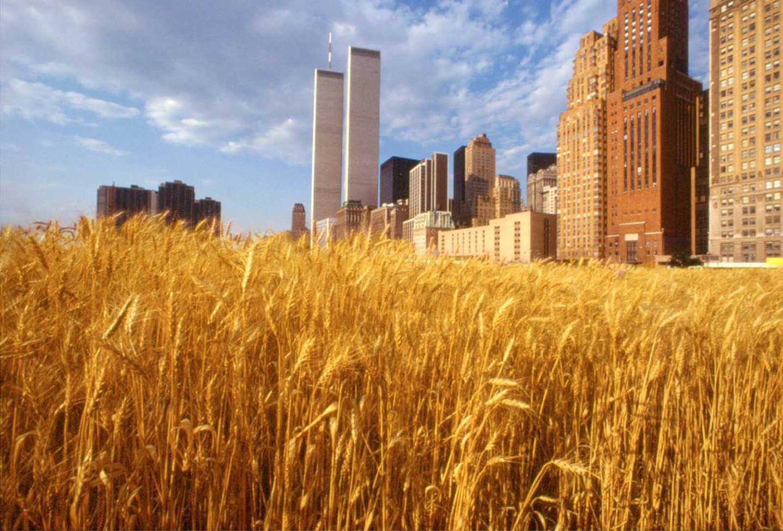 Агнес Денес, «Поле пшеницы — конфронтация», Нью-Йорк, 1982