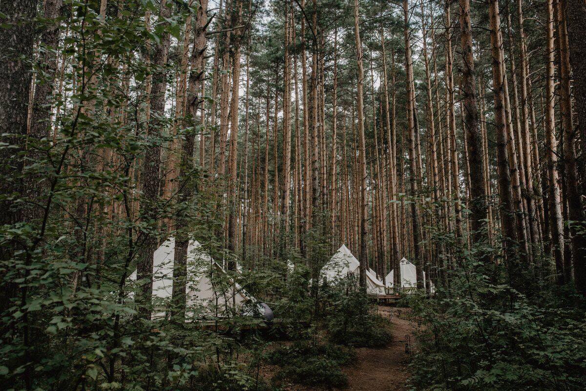 «Лес и Море», Калязин
