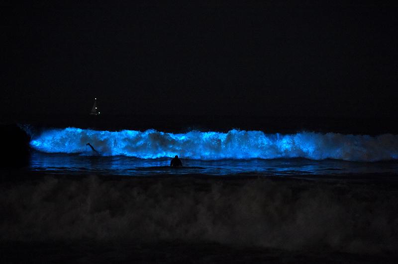 Пляж Венис Бич