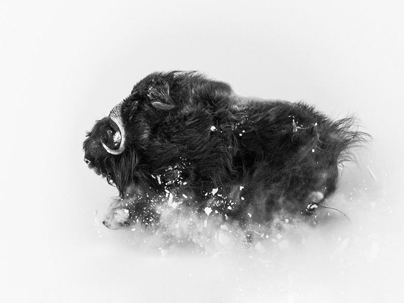 Фото: Jonas Beyer / National Geographic
