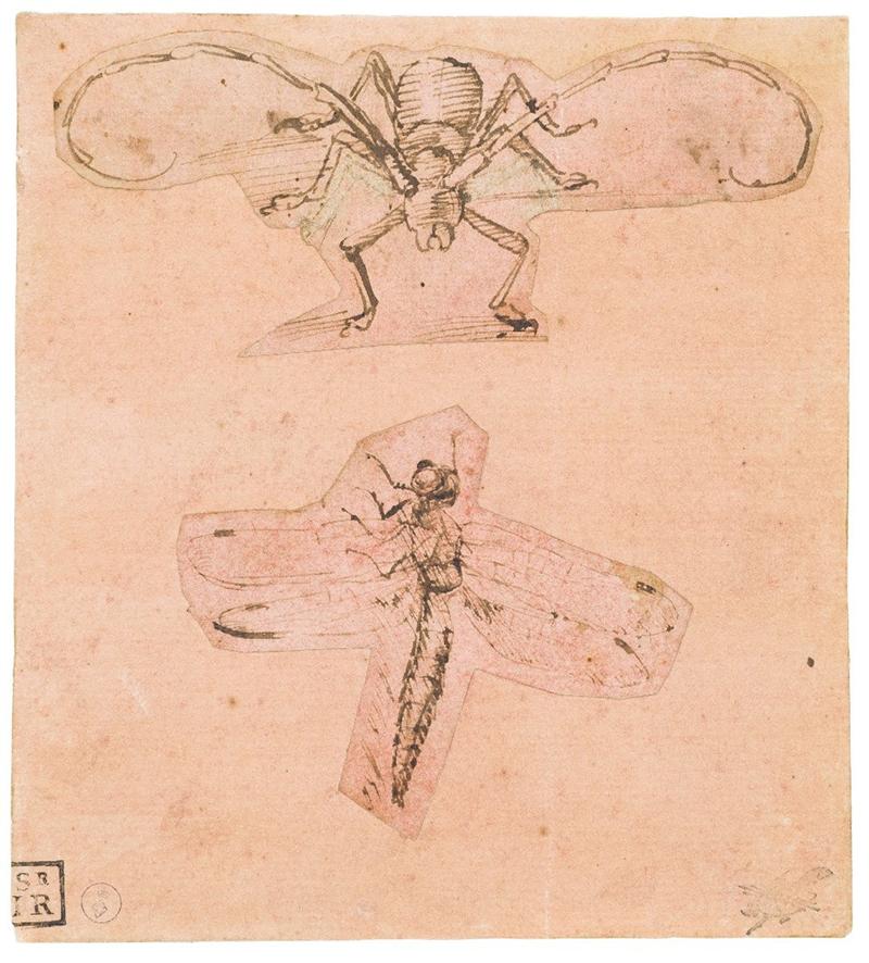 Леонардо да Винчи, рисунок жука-усача и стрекозы
