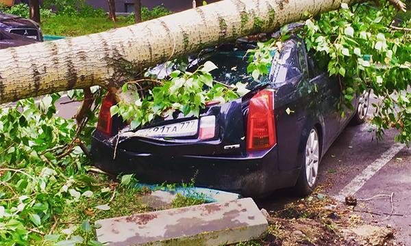 «Весь двор завален». Как автомобилисты пережили грозу