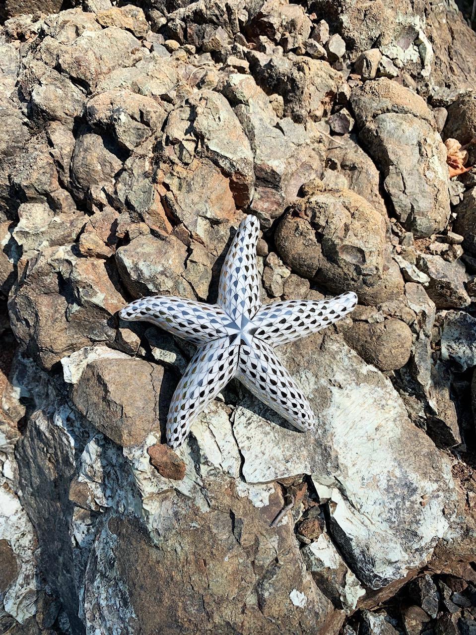 Фигурка в виде морской звезды Herend в окрестностях заповедных лесов и окаменелостей, D Maris Bay