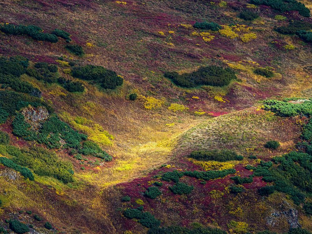 Осенние ковры Камчатки