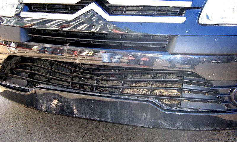 Столкновение машины с зайцем признали страховым случаем