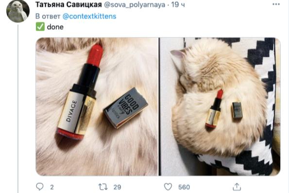 Фото: @sova_polyarnaya