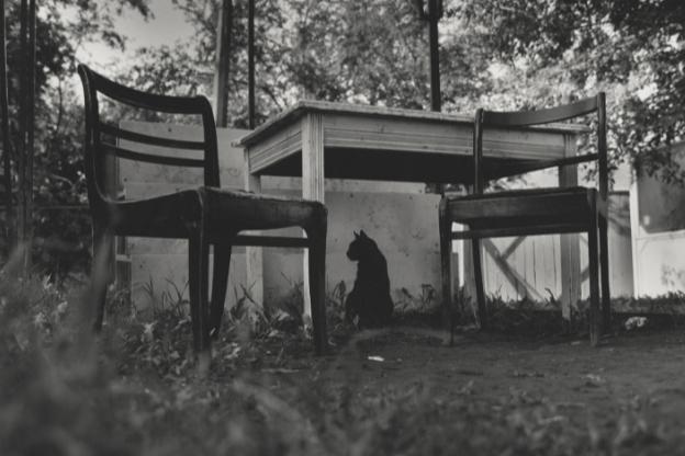 Наталья Богданович, Сергей Пушкин, без названия, из серии «Кошки города Гродно»,2006-2007