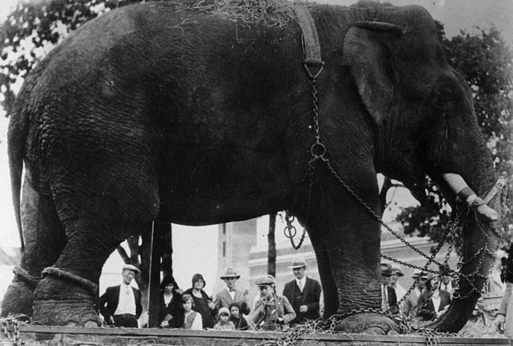 Слон Таско