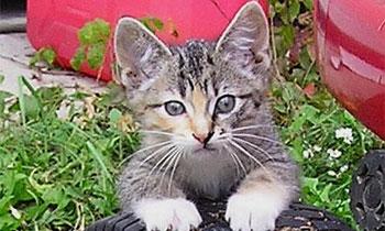 Котенок проехал полторы тысячи километров под крылом машины