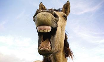 Пьяная румынская лошадь сбила пенсионера