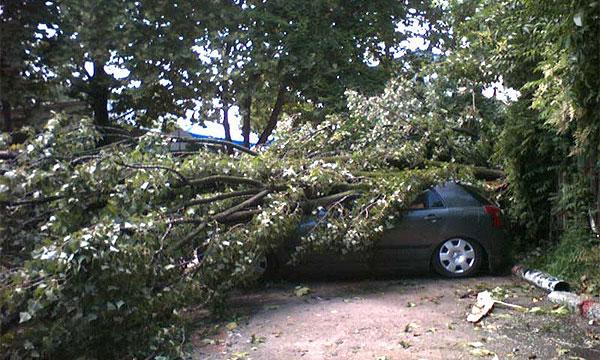 МЧС просит автовладельцев не ставить машины под деревьями