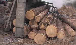 В республике Коми в ДТП с лесовозом пострадали 18 человек