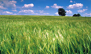 К 2020 году 10% Европы перейдет на биотопливо