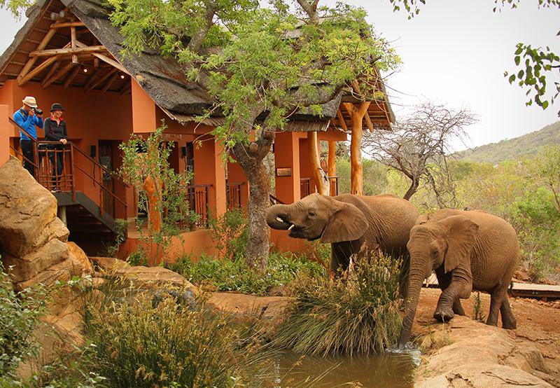 Сафари-парк Thanda Safari