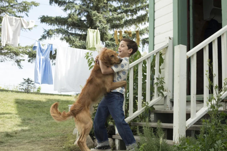 Кадр из фильма «Собачья жизнь»