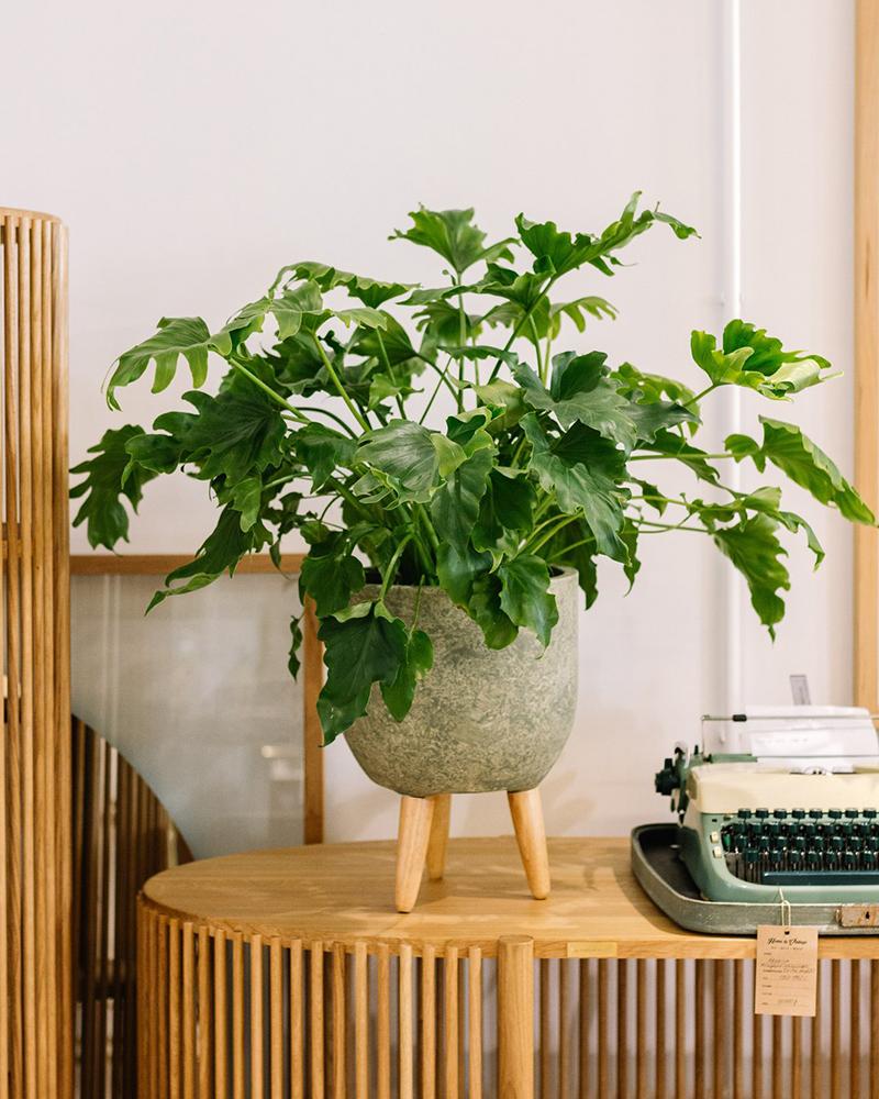 Фото: buywifeplants.ru
