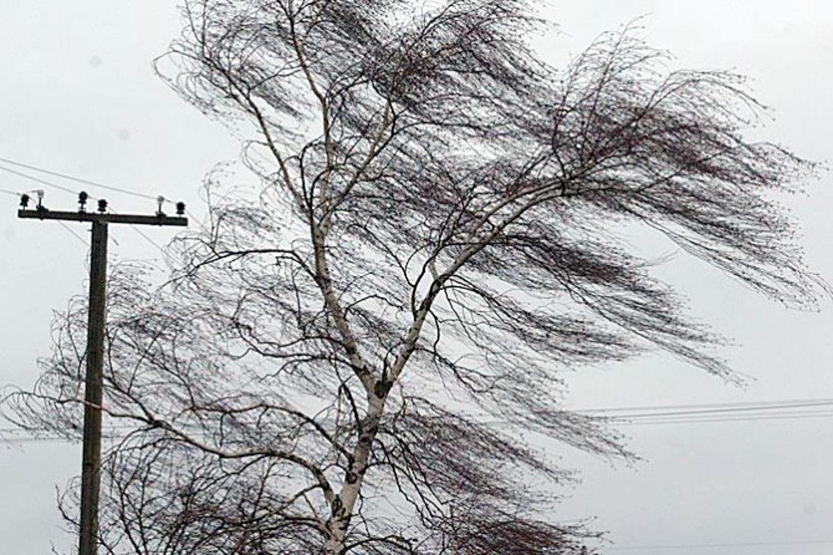 На Прикарпатті передають сильний вітер