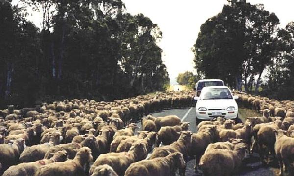 Испанцы блокируют дороги из-за роста цен на бензин