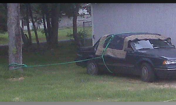 Американцы привязывают автомобили к деревьям