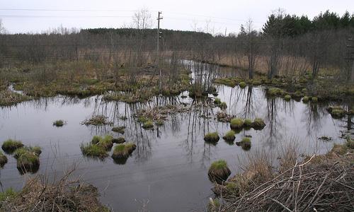 В Свердловской области ВАЗ с тремя пассажирами утонул в болоте