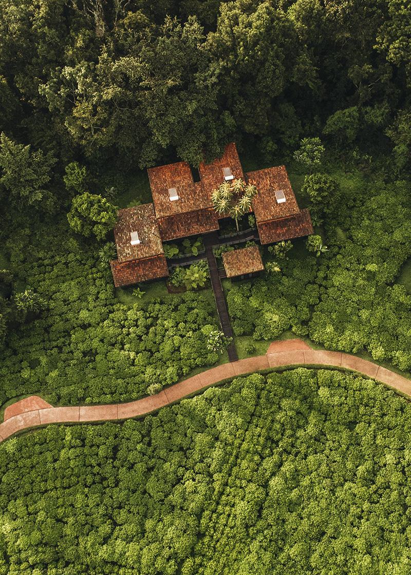 Вид на действующую чайную плантацию и экокурорт One&Only Nyungwe House