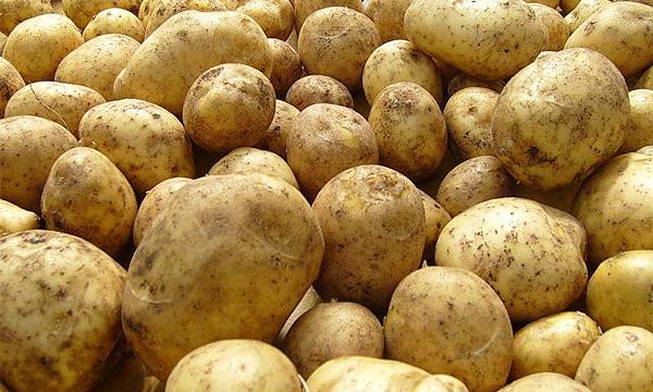 Активисты начнут сажать картошку в дорожные ямы