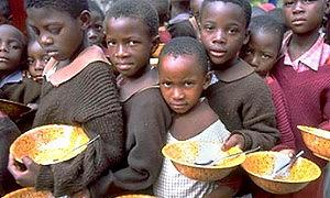 Производство биотоплива грозит мировым голодом